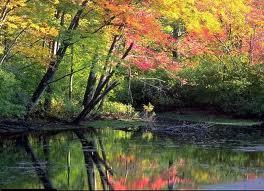 automne.jpg?w=645